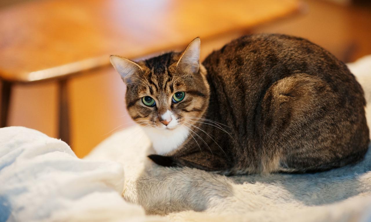Un gato mirandote - 1280x768