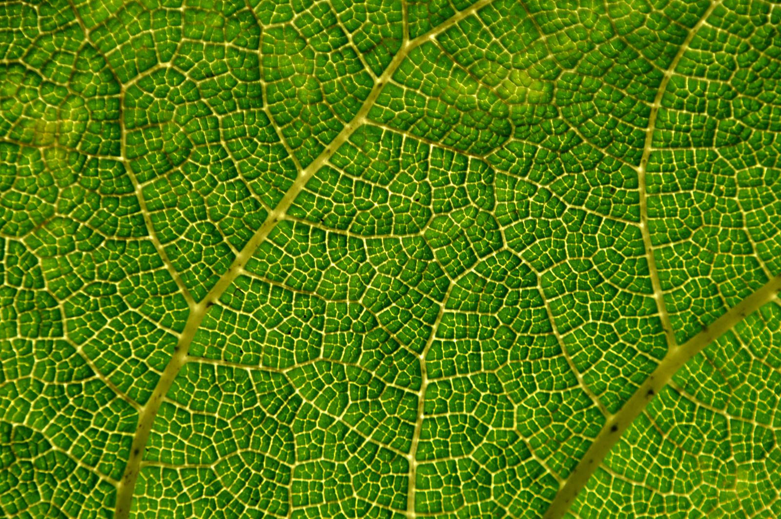 Textura de hoja de arbol - 1600x1064