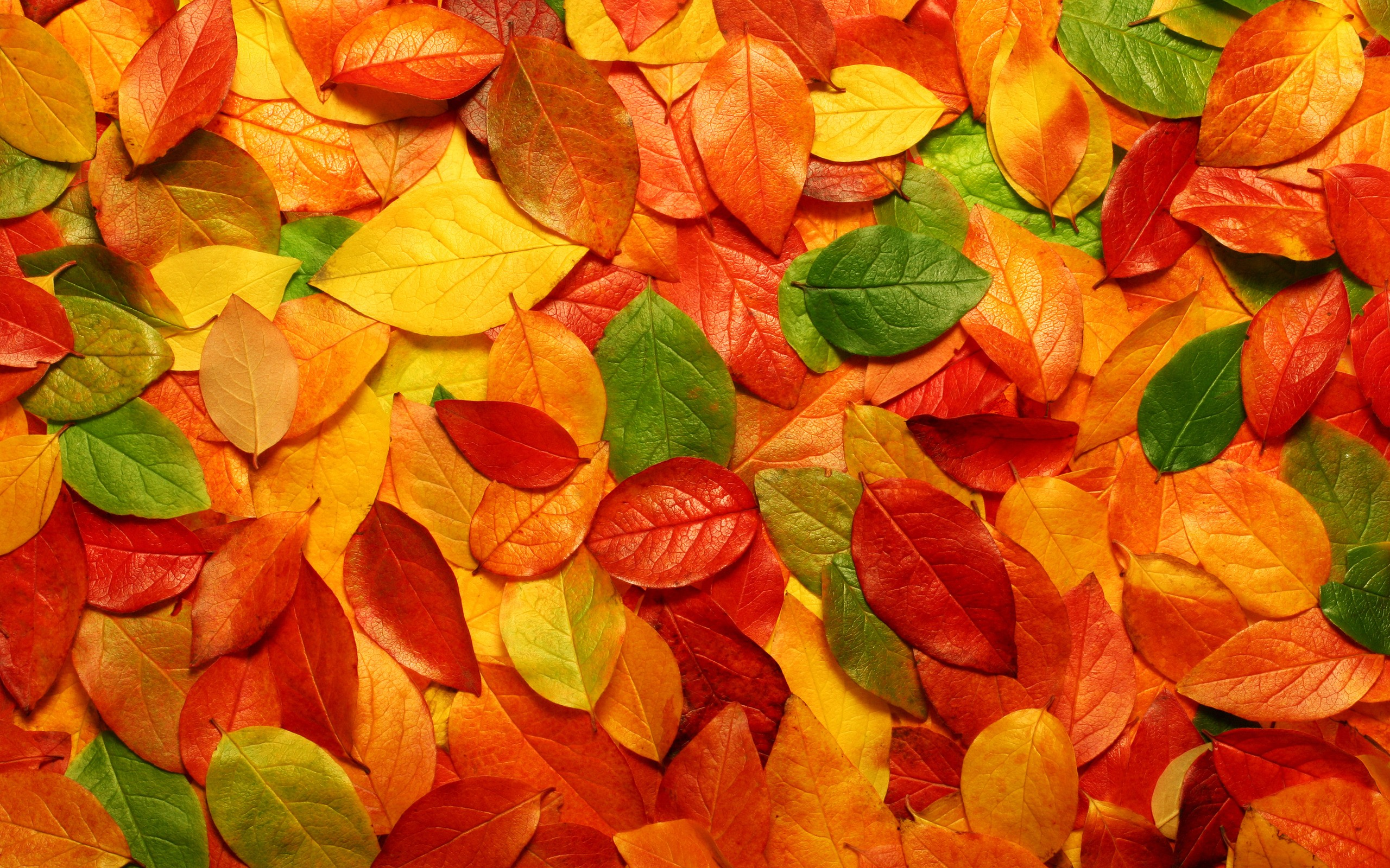 Textura de hojas - 2560x1600