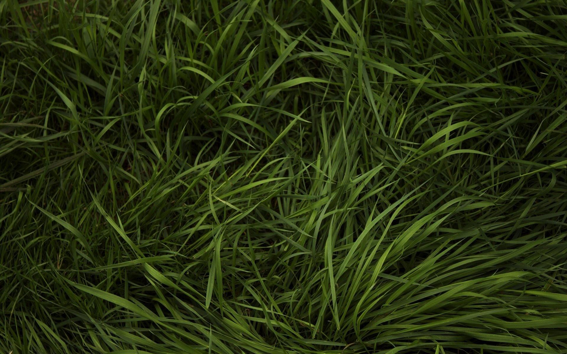 Textura de pasto verde - 1920x1200