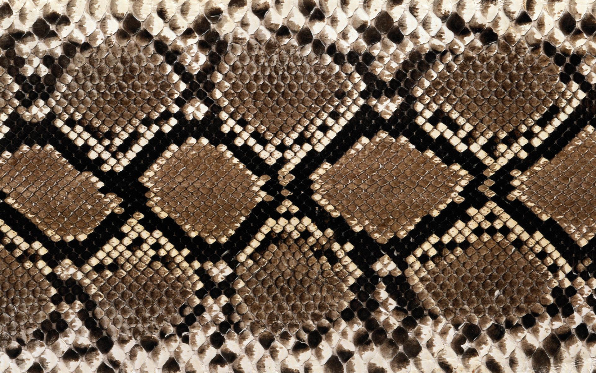 Textura de piel de boa - 1920x1200
