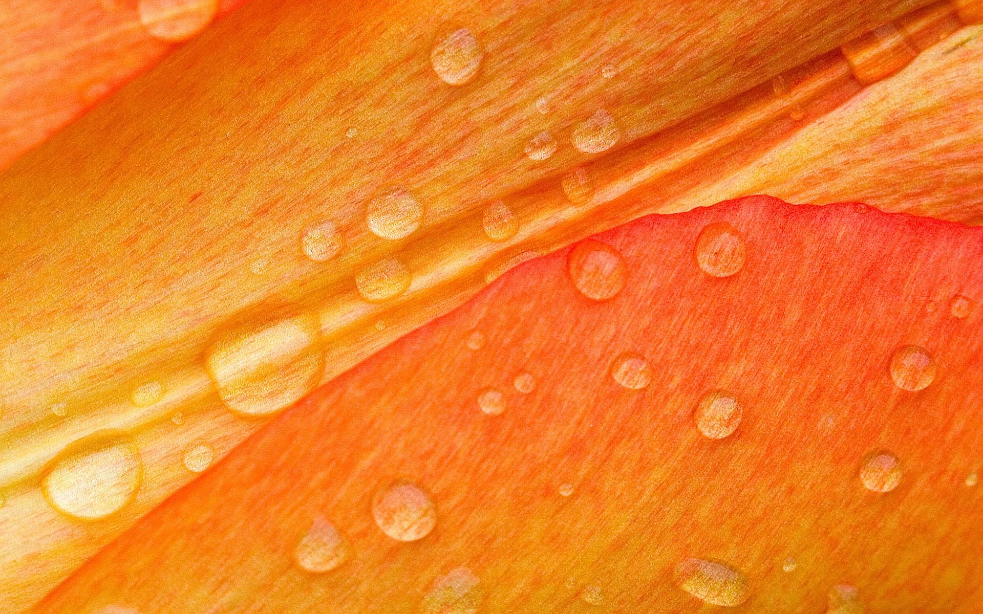 Textura naranja - 1920x1200