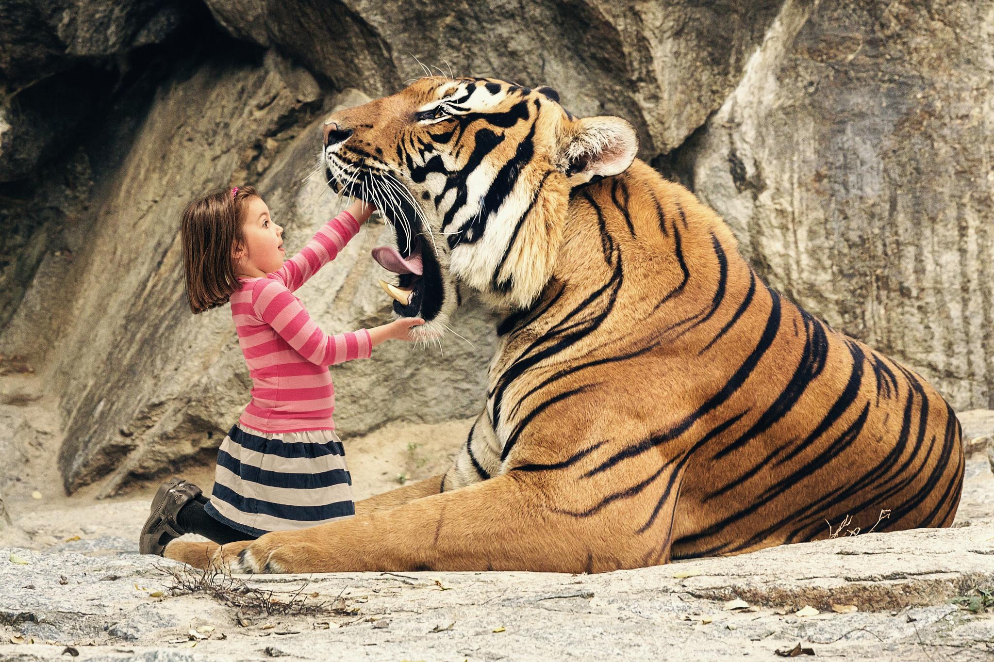 Tigre con boca abierta - 2048x1365
