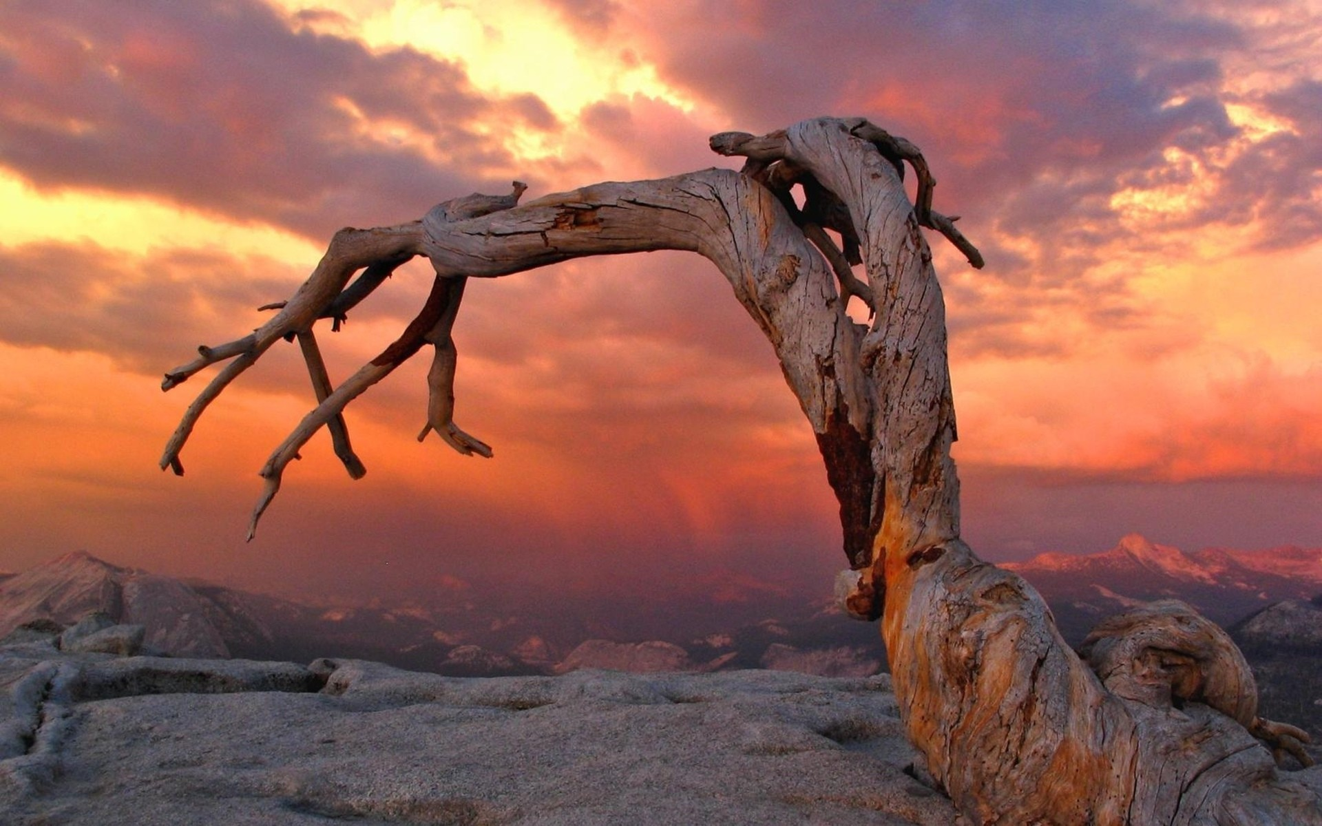 Tronco de un árbol - 1920x1200