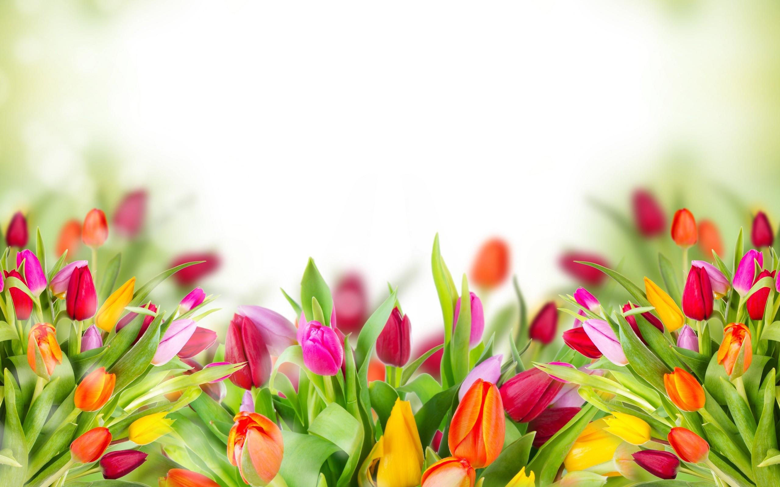 Tulipanes en 3D - 2560x1600