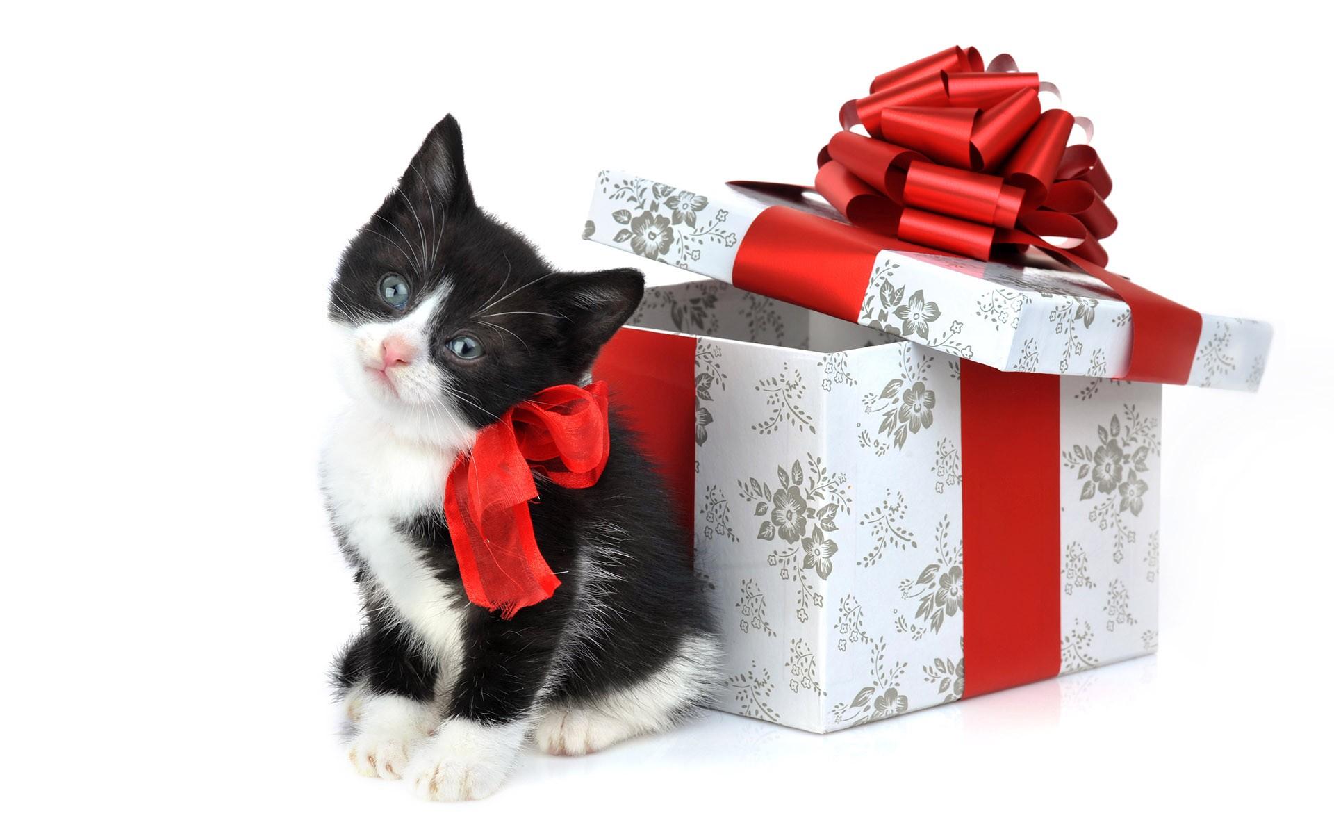 Un gatito como regalo de navidad - 1920x1200