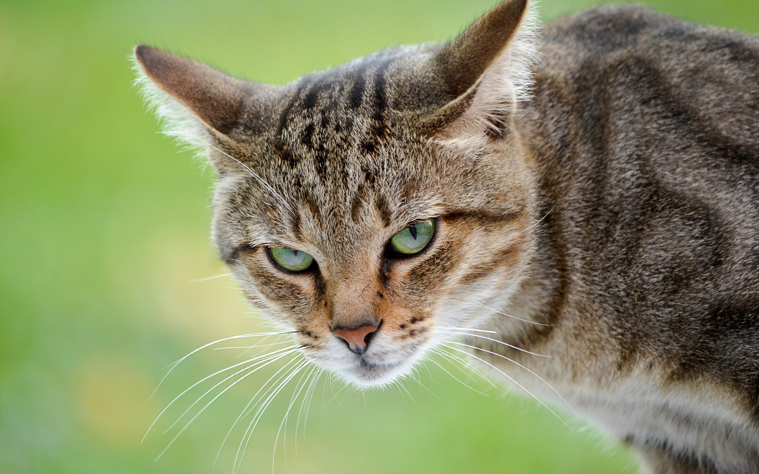 Un gato - 2560x1600