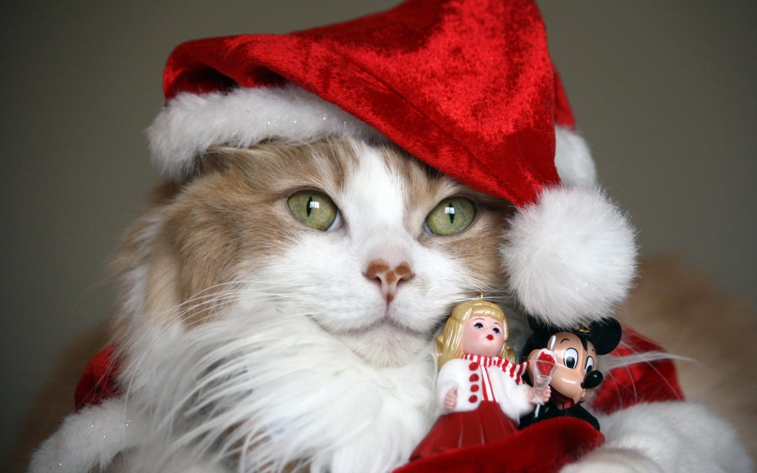 Un gato disfrazado de Papa noel - 2560x1600