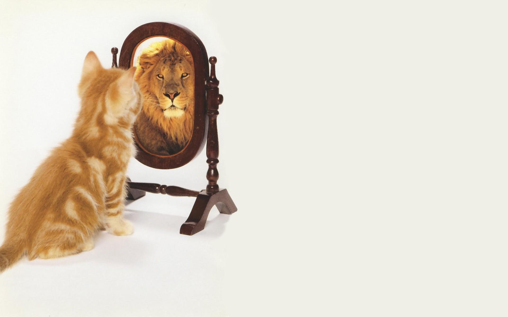 Un gato en el espejo - 1920x1200