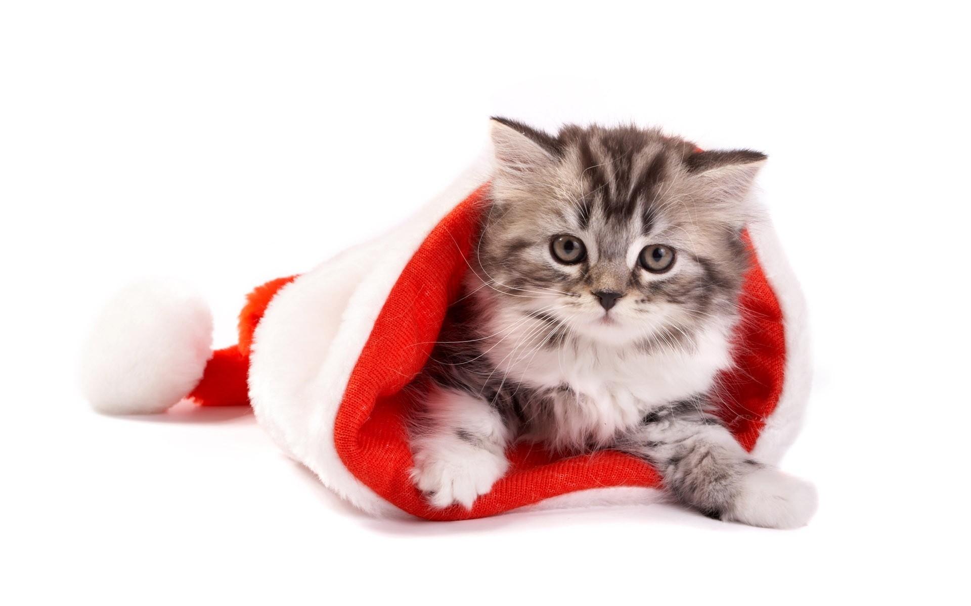 Un gato en un gorro de navidad - 1920x1200