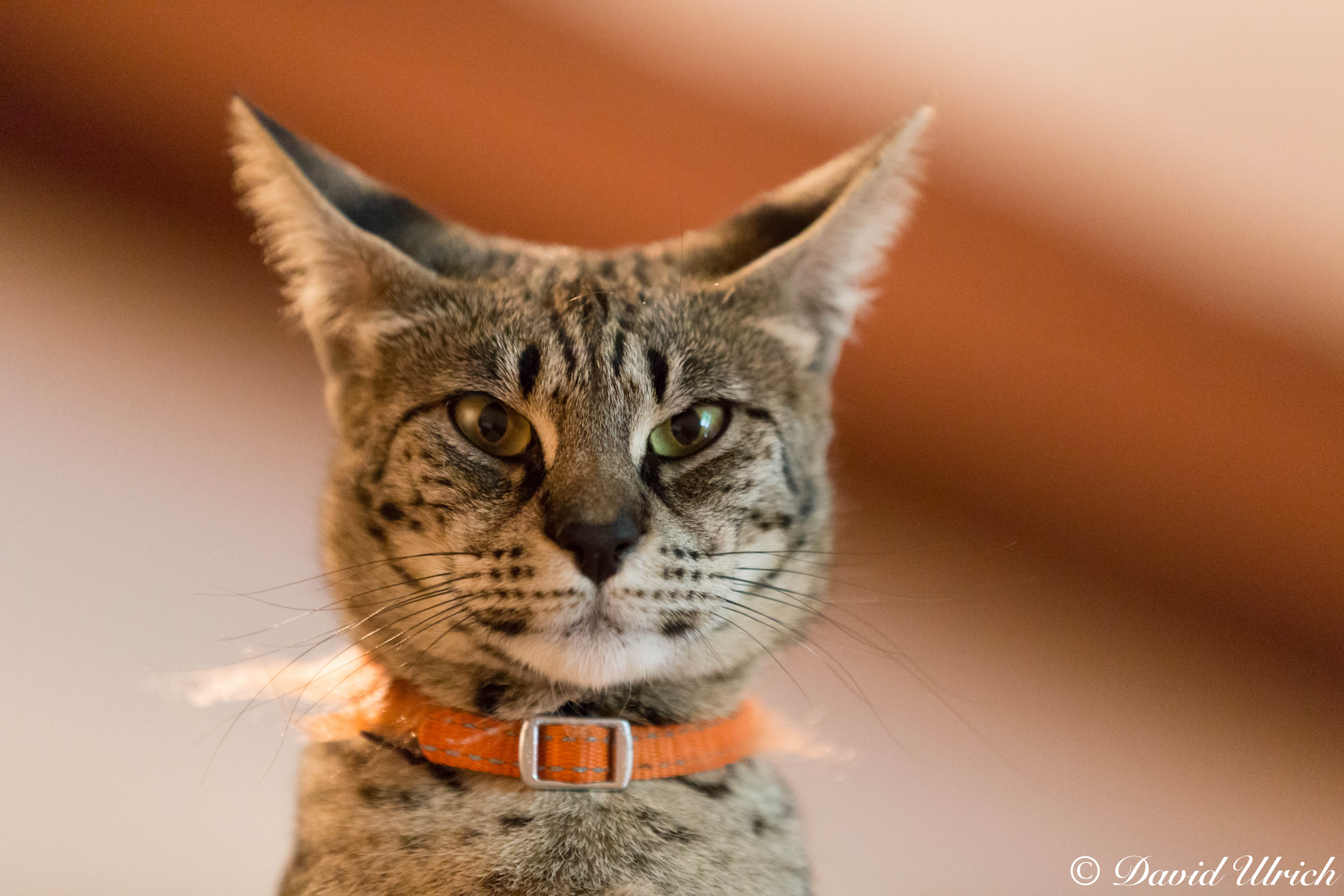 Un gato gris - 5472x3648
