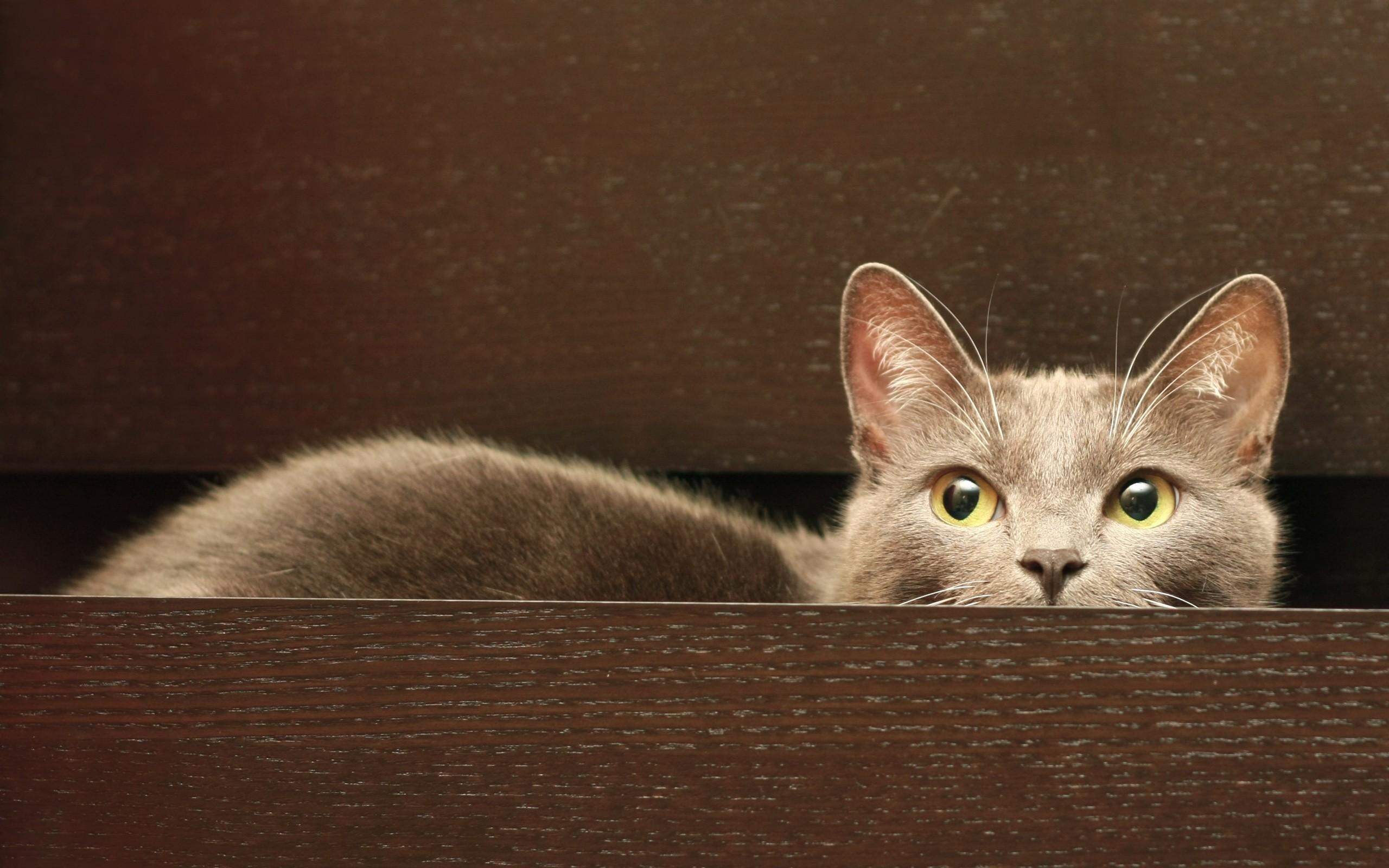 Un gato oculto - 2560x1600