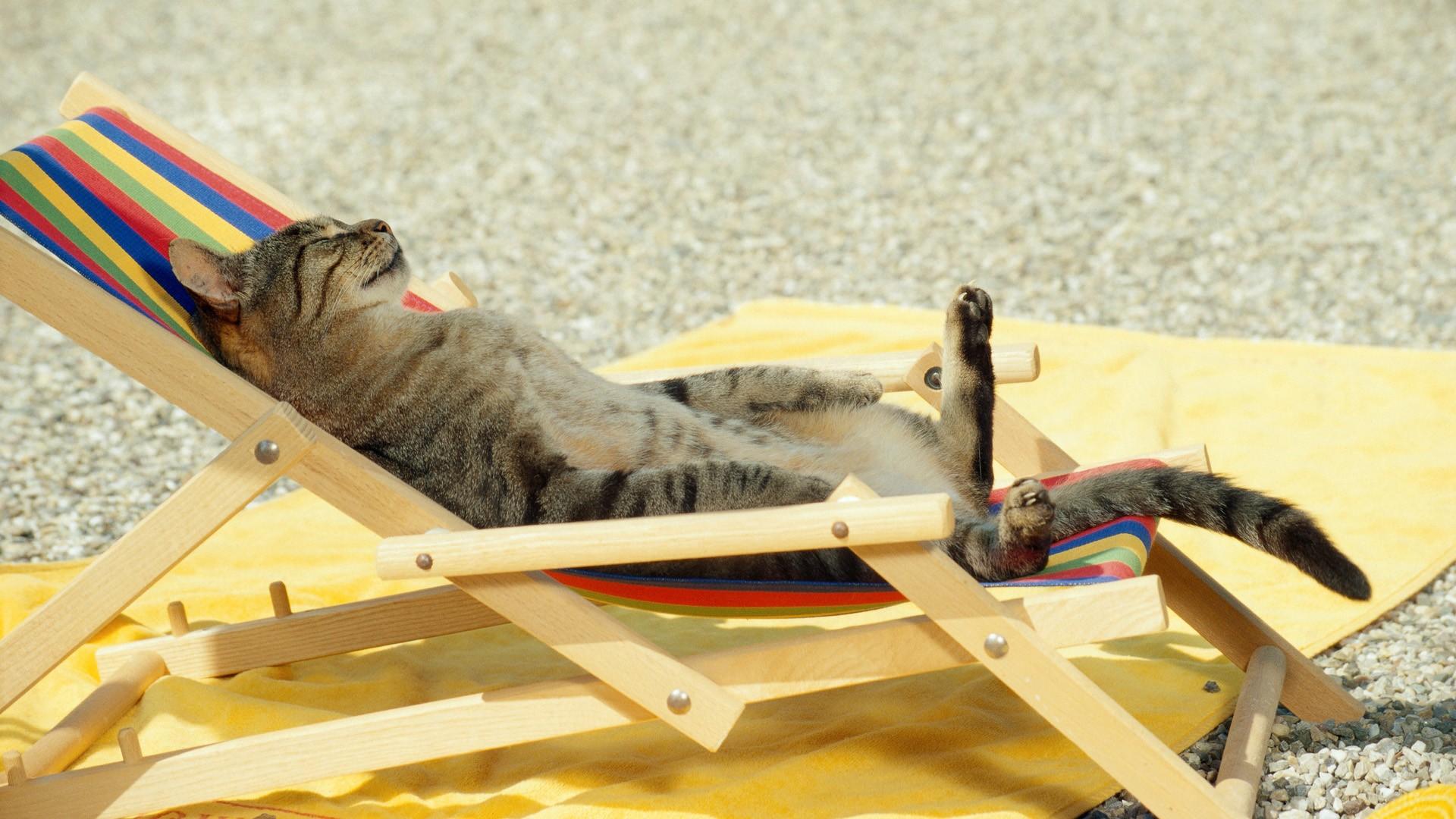 Un gato tomando sol - 1920x1080