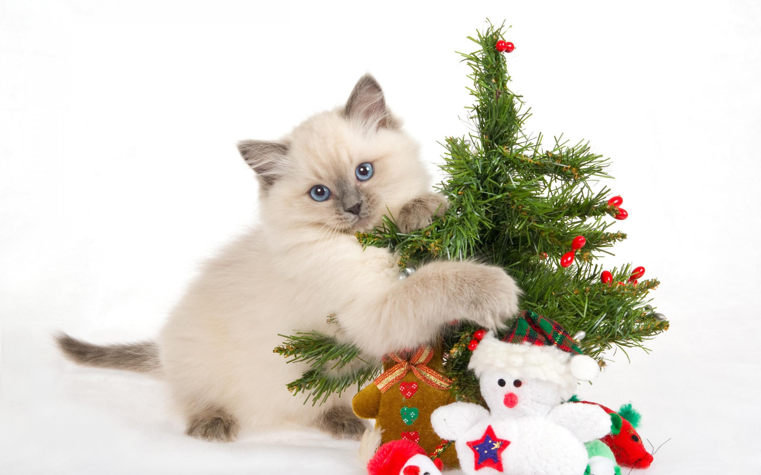 Un gato y arbolito de navidad - 2560x1600