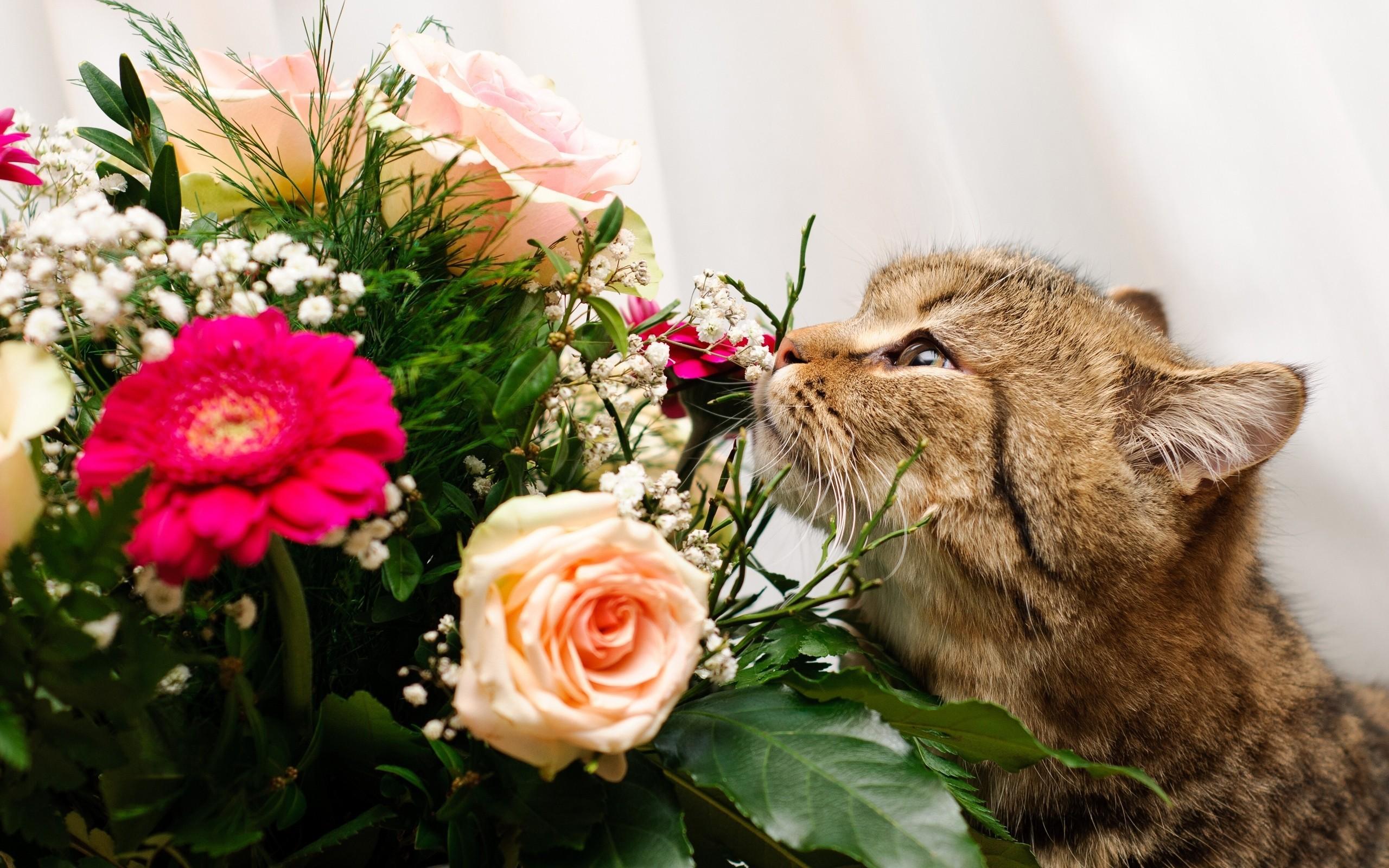 Un gato y rosas - 2560x1600