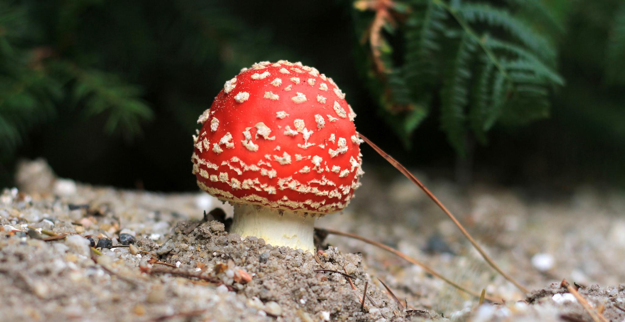 Un hongo rojo - 2048x1055