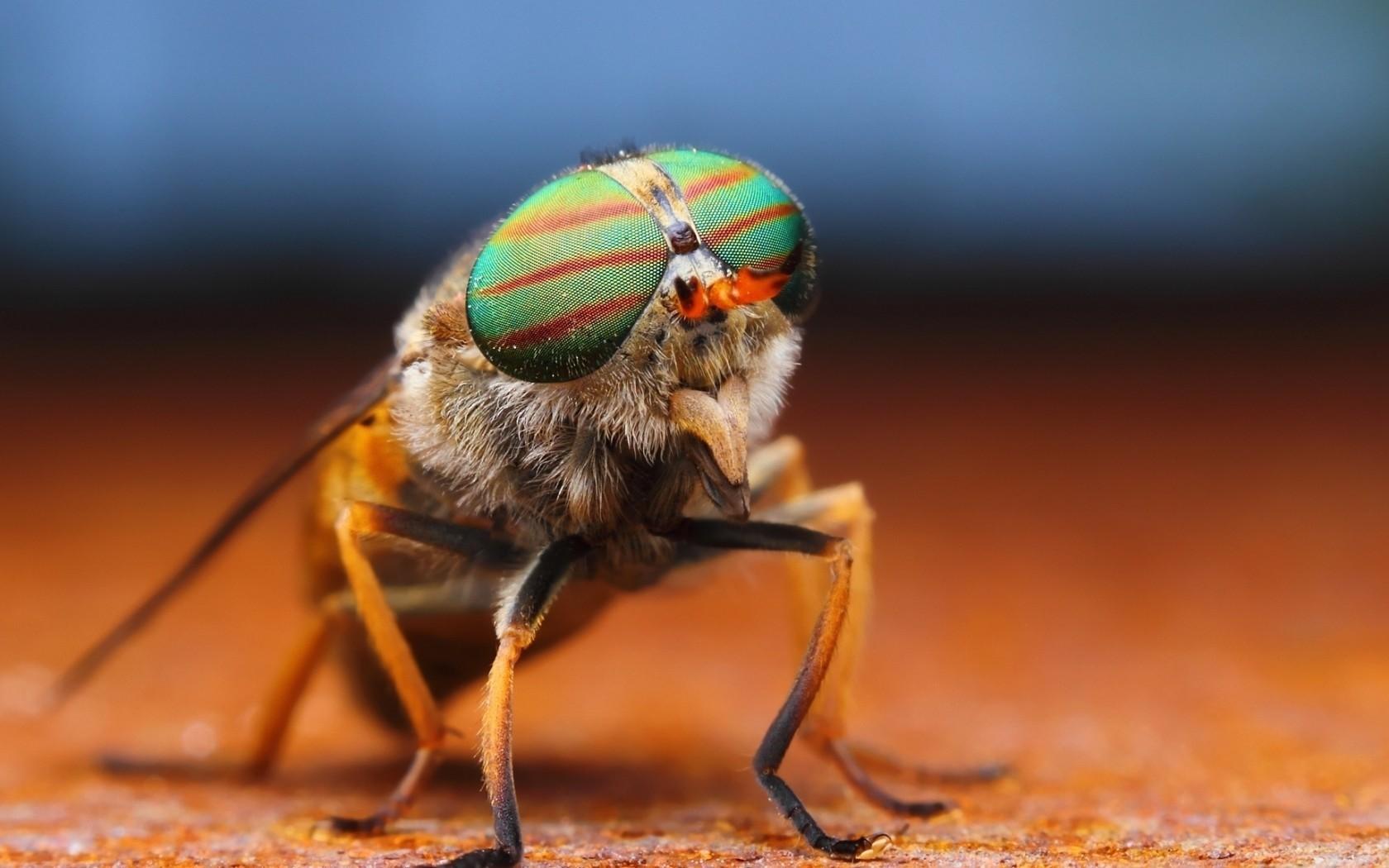 Un insecto - 1680x1050