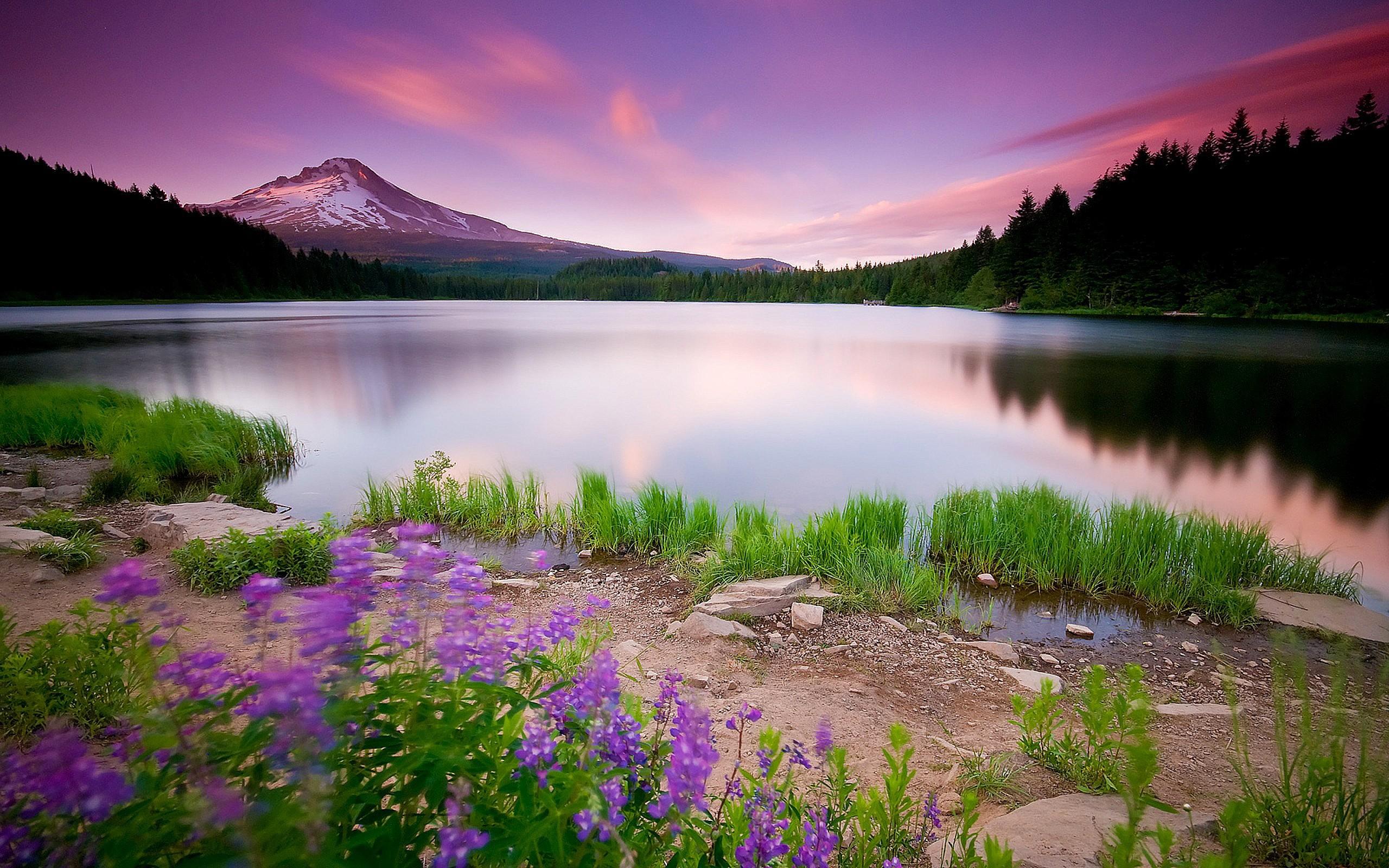 Un lago púrpura - 2560x1600