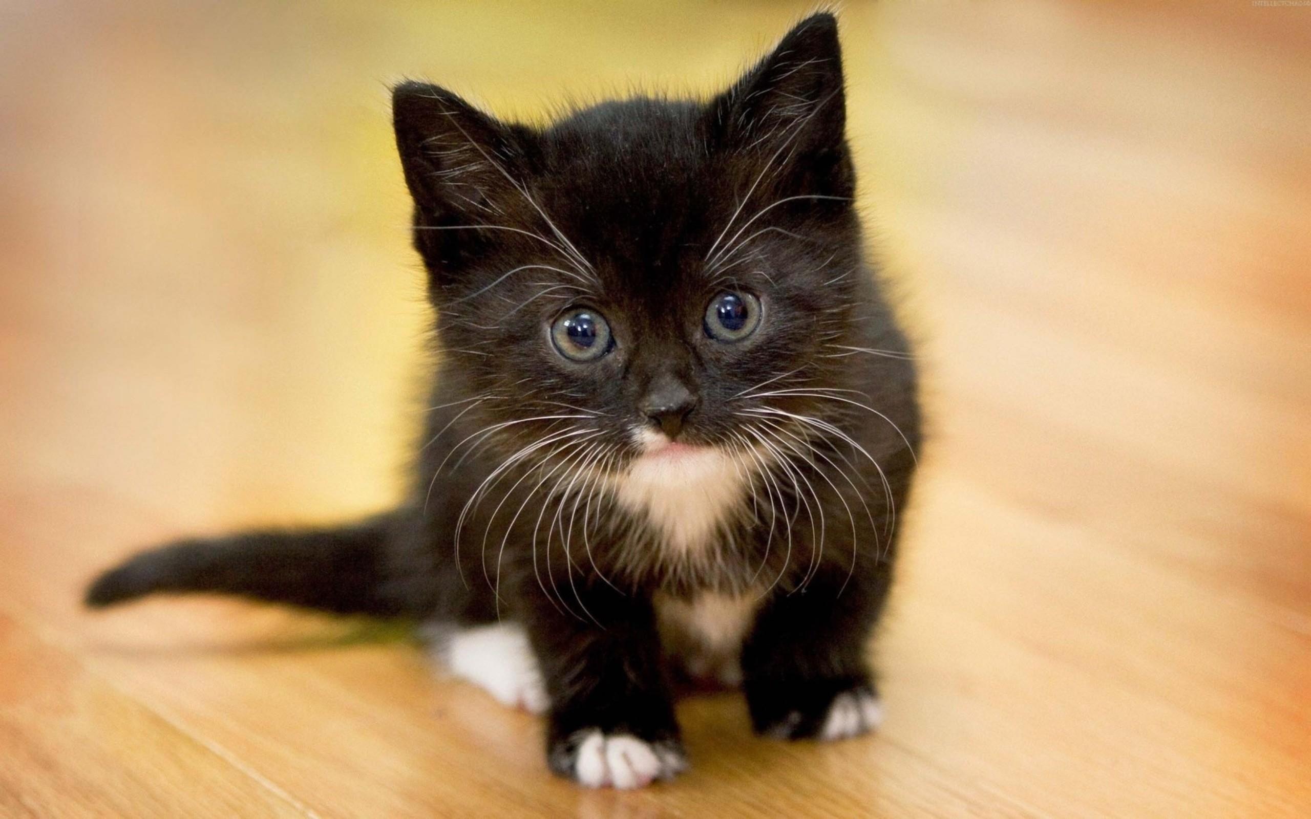 Un pequeño gato negro - 2560x1600