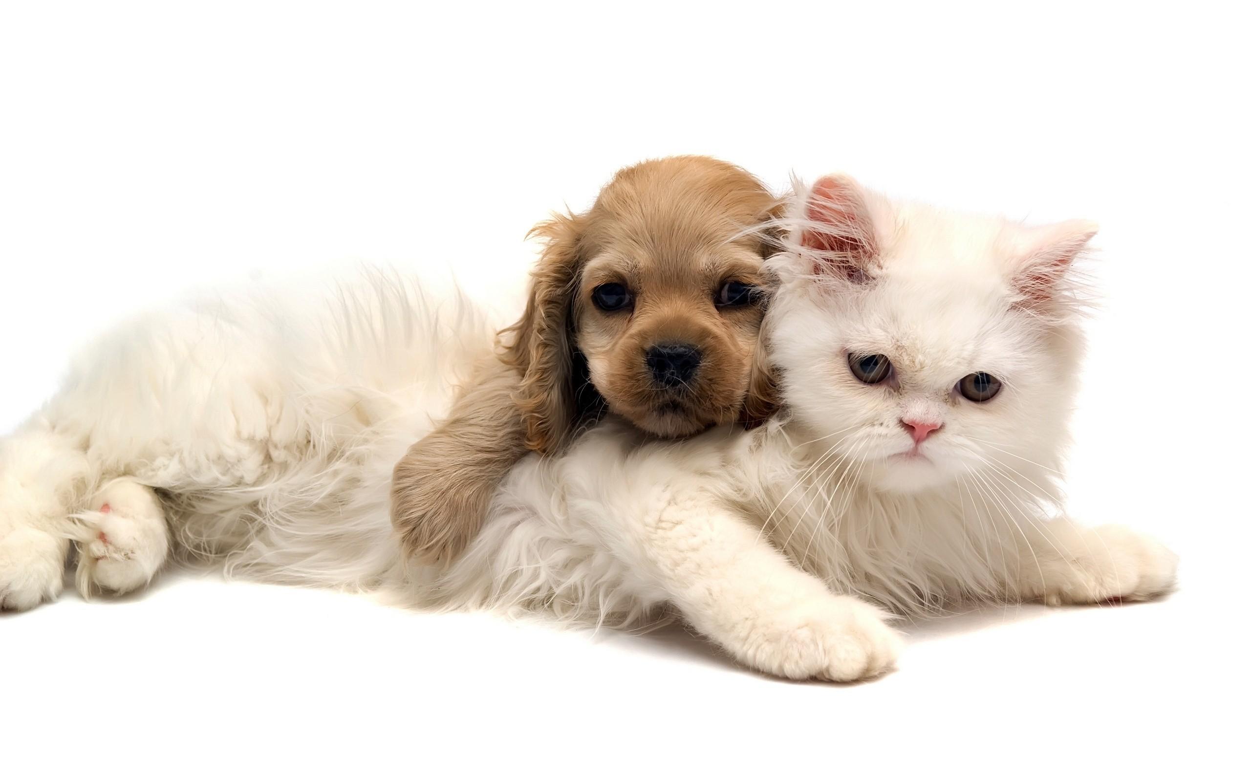 Un perro y un gato - 2560x1600