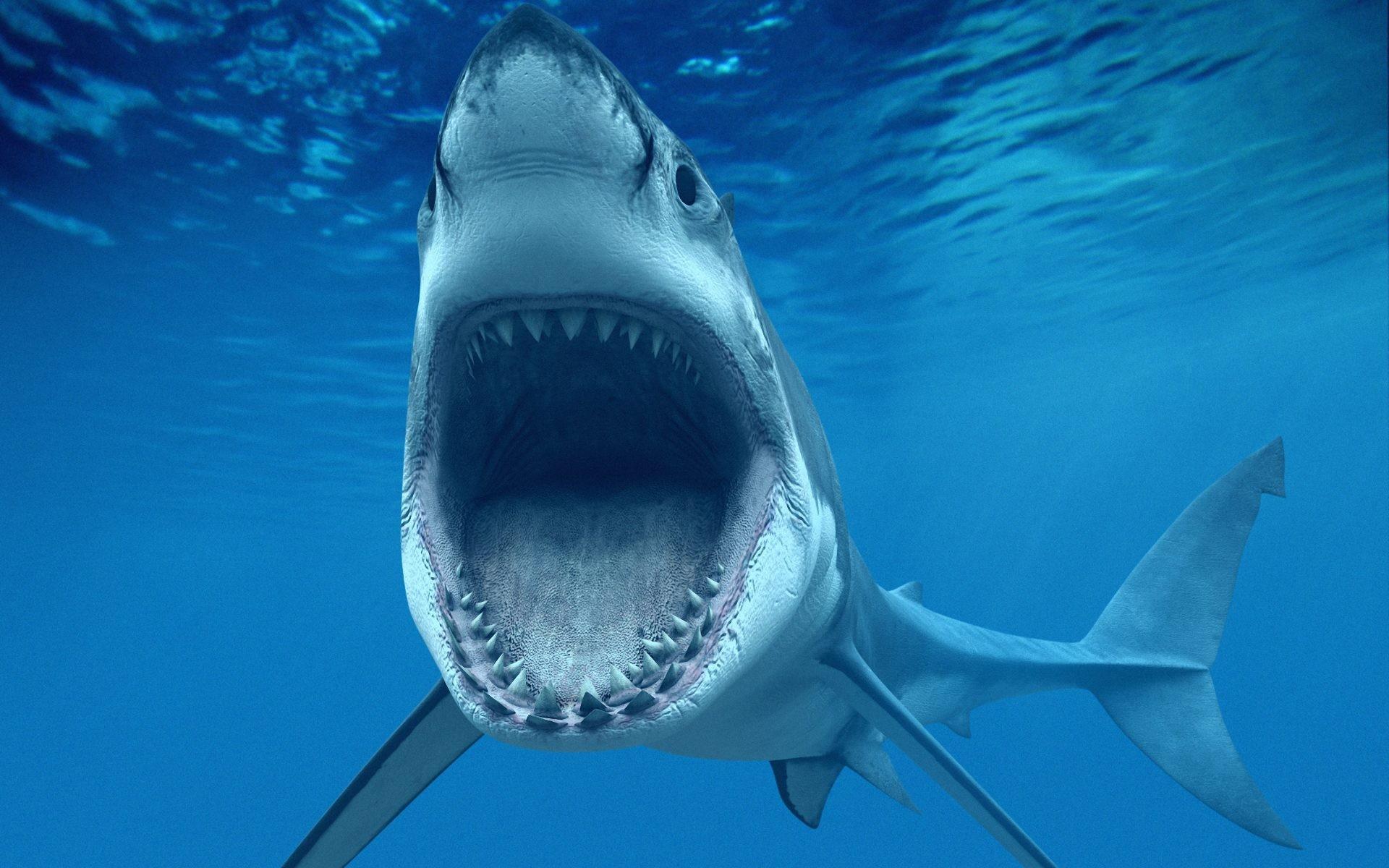 Un tiburón hambriento - 1920x1200