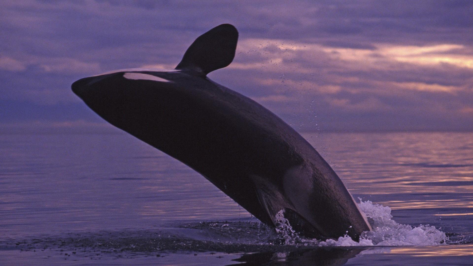 Una ballena - 1920x1080