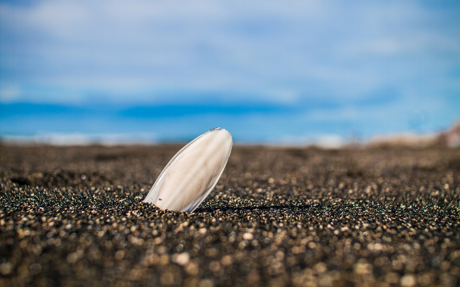 Una concha en la playa - 1920x1200