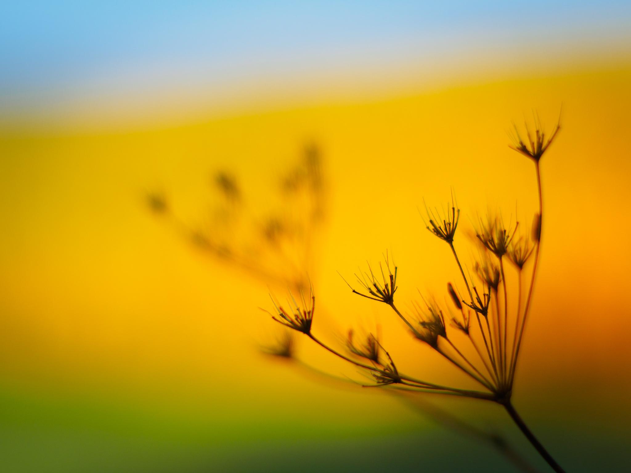 Una flor desenfocada - 2048x1536