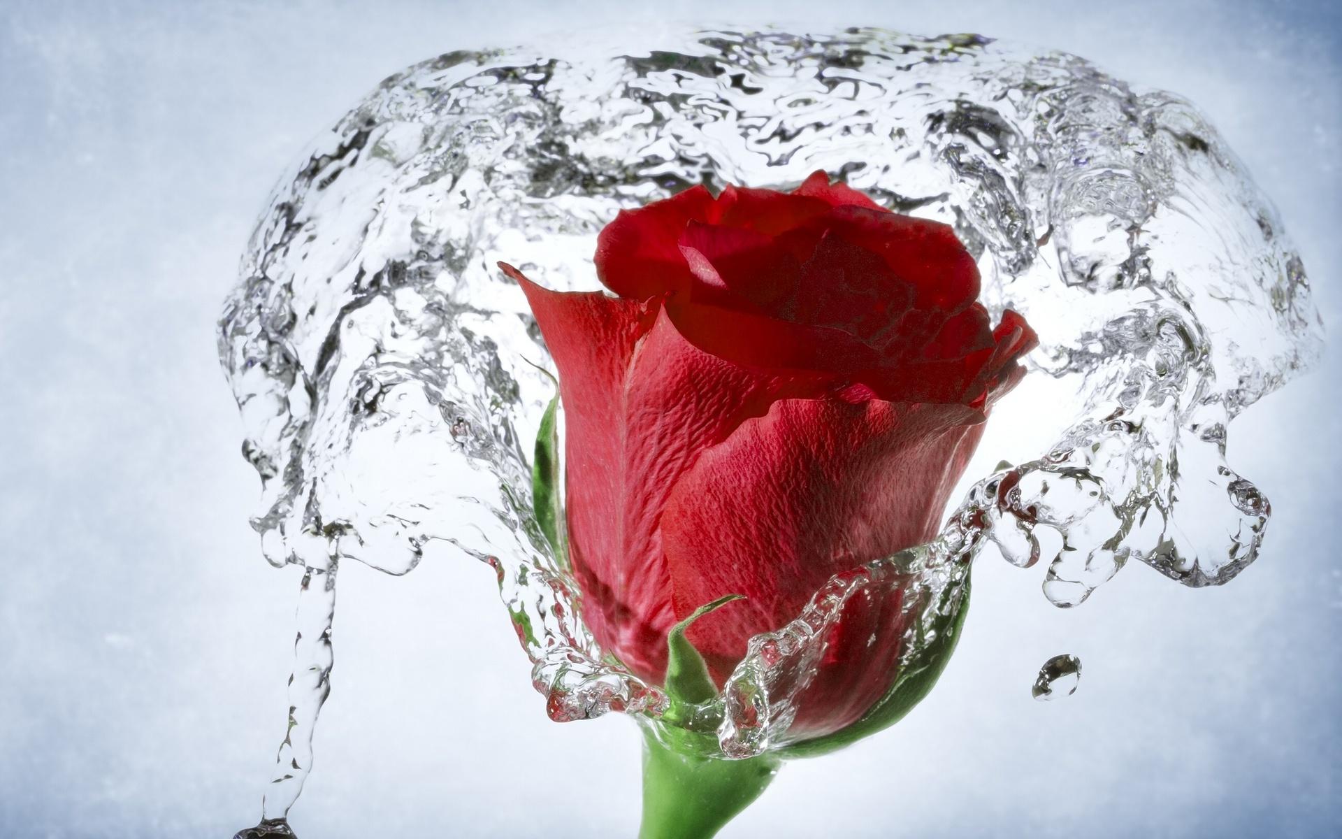 Una flor en el agua - 1920x1200