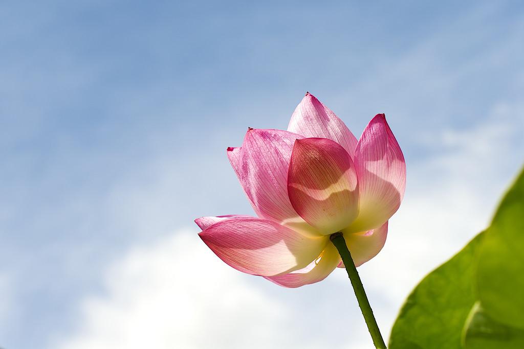 Una hermosa flor rosa - 1024x683