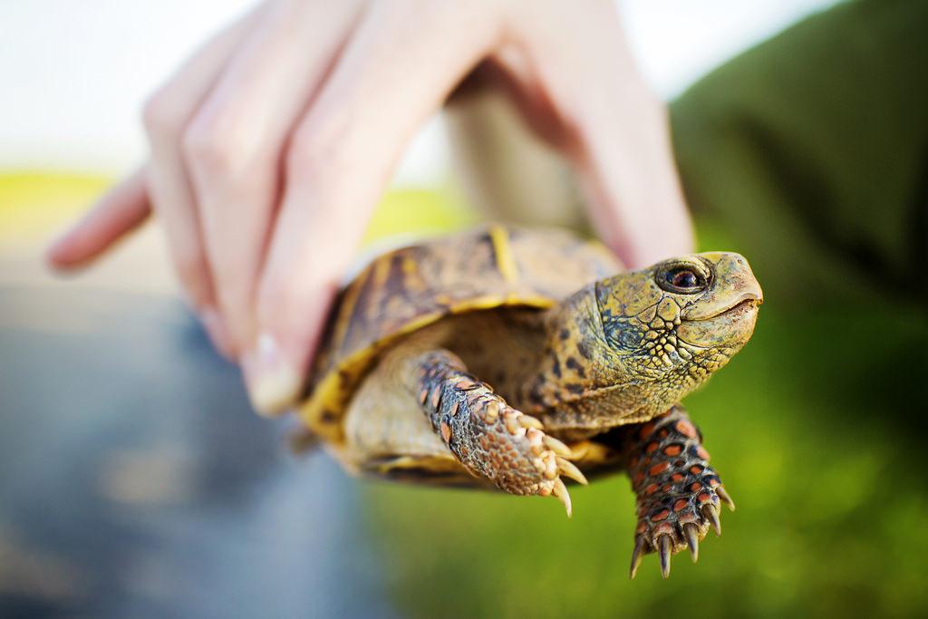 Una hermosa tortuga en la mano - 1024x683