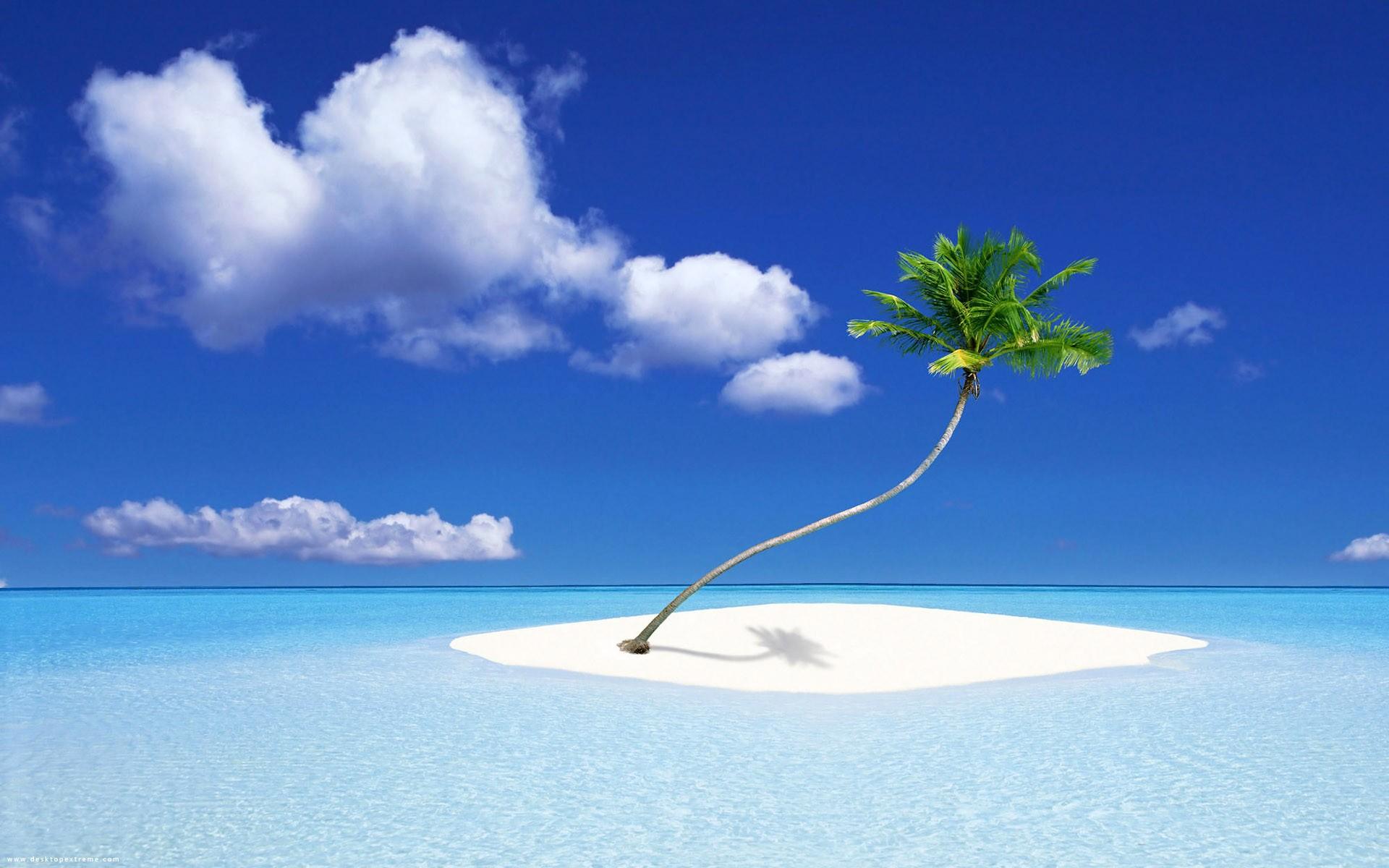 Una isla con una palmera - 1920x1200