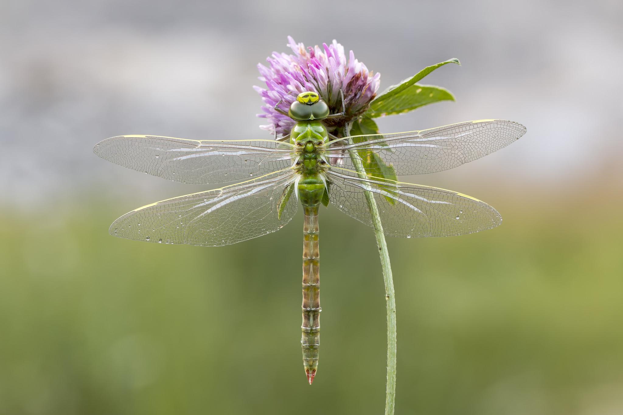 Una libélula - 2048x1365