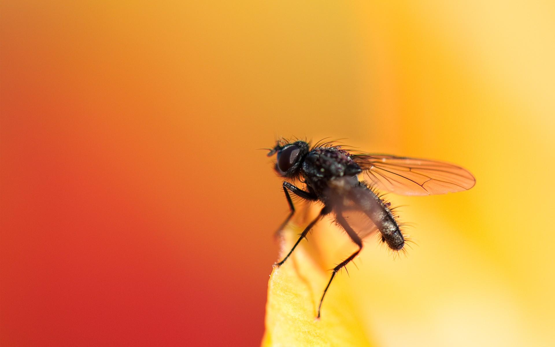 Una mosca - 1920x1200