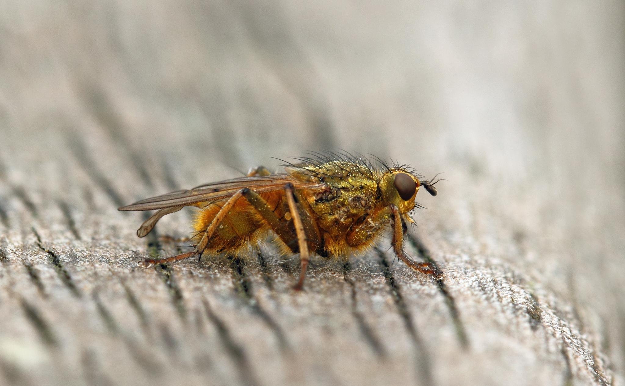 Una mosca en macro - 2048x1266