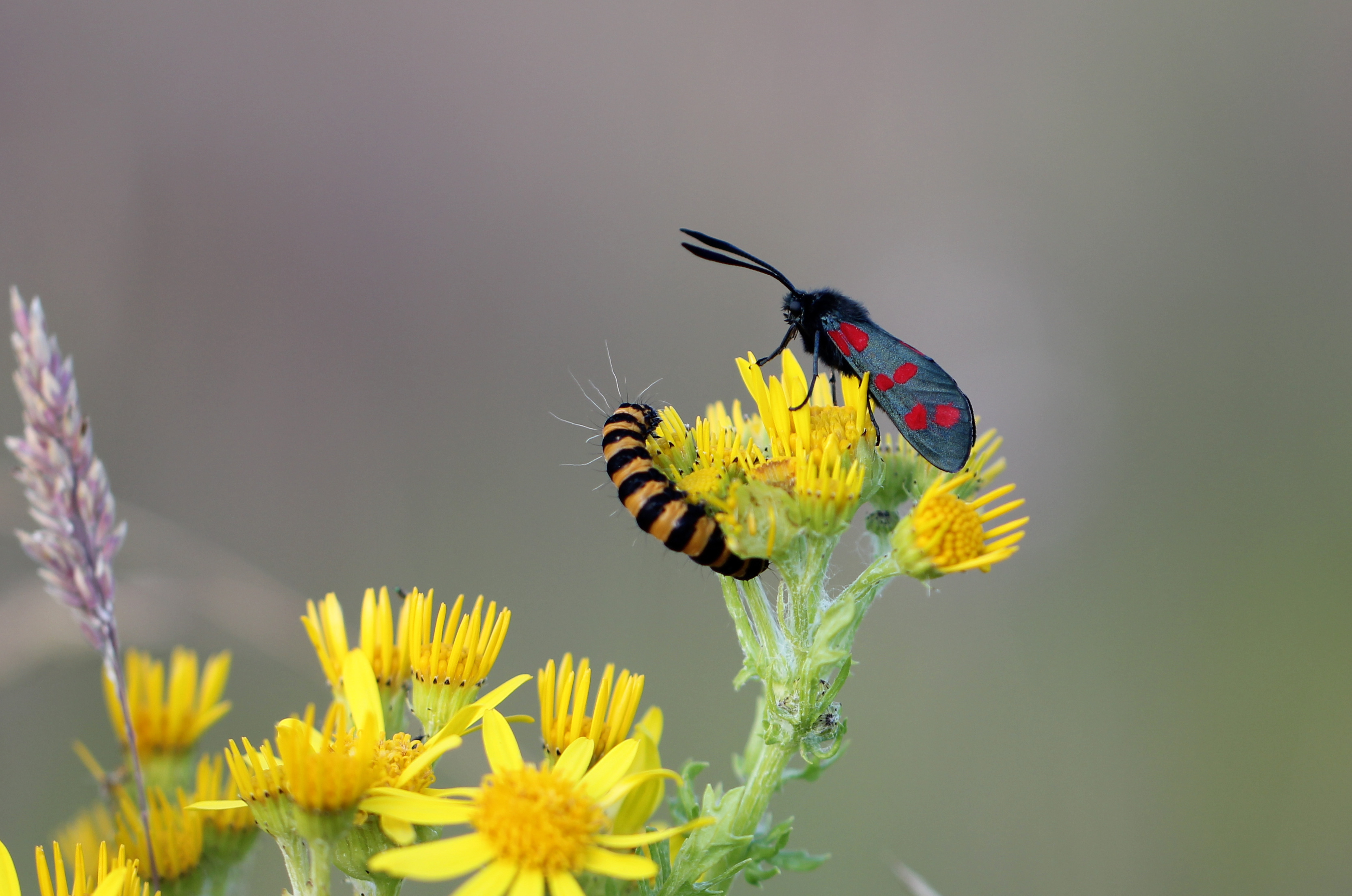 Una pareja de insectos - 3333x2210