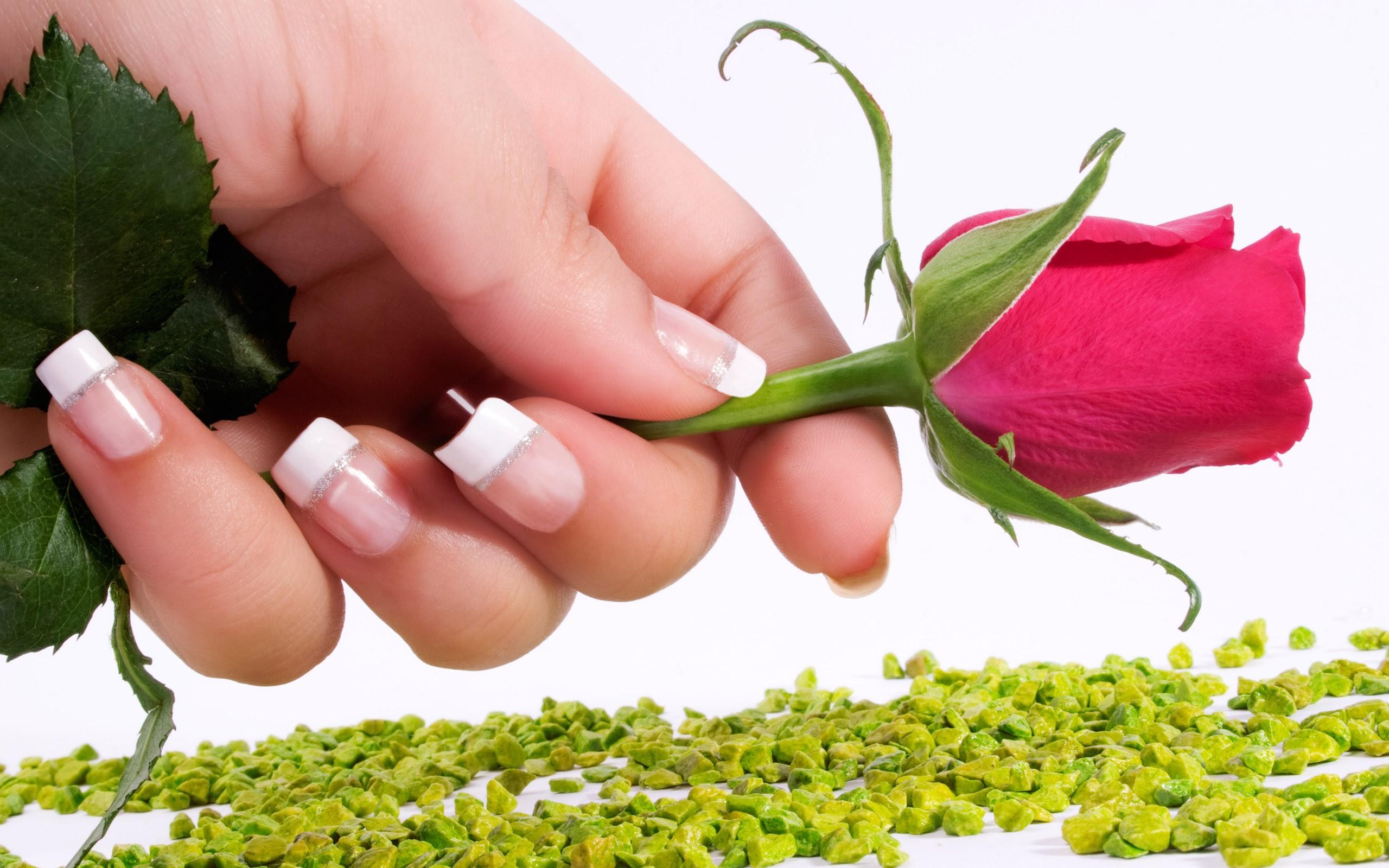 Una rosa y una mano - 2560x1600