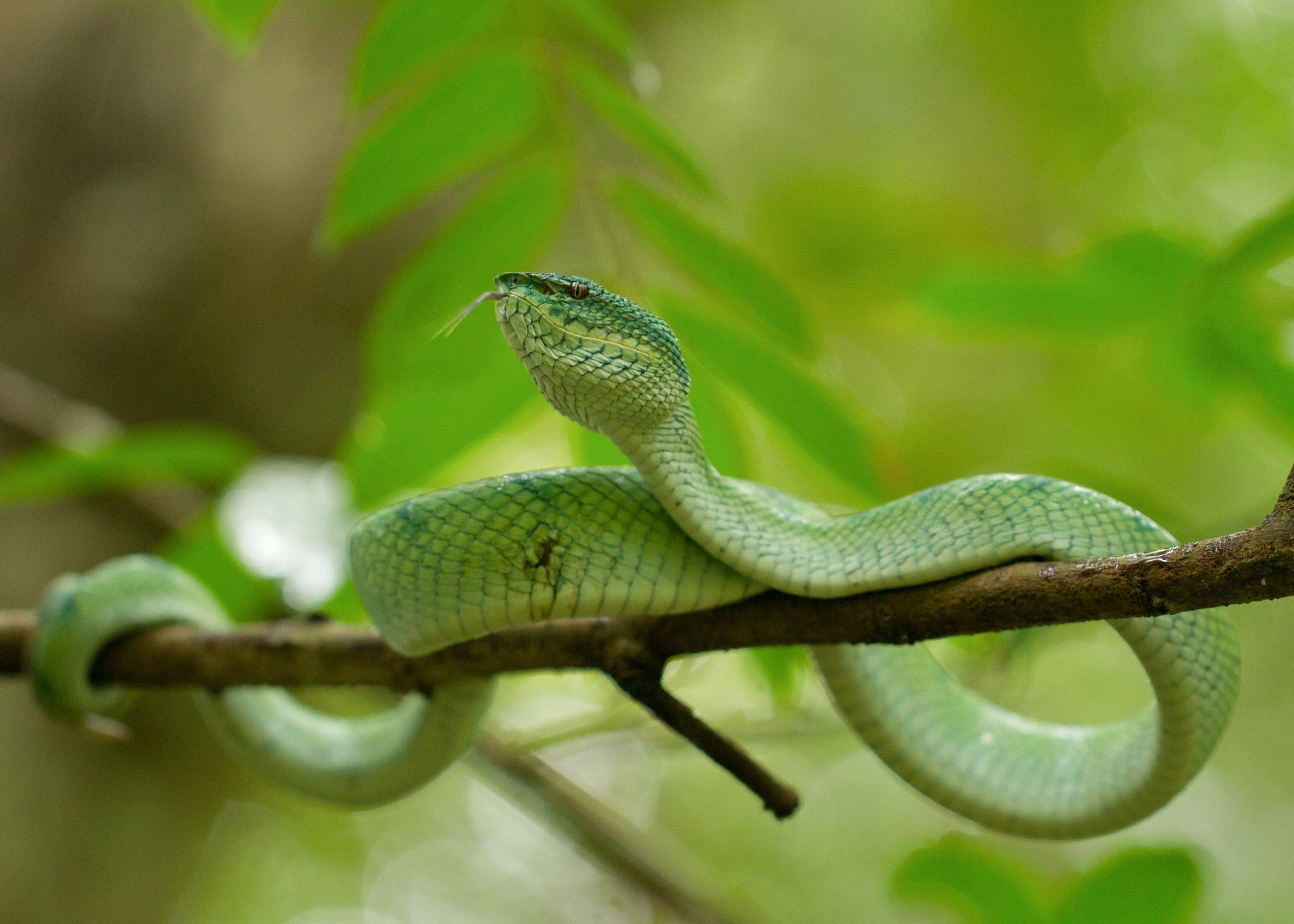 Una serpiente Viper - 2048x1463