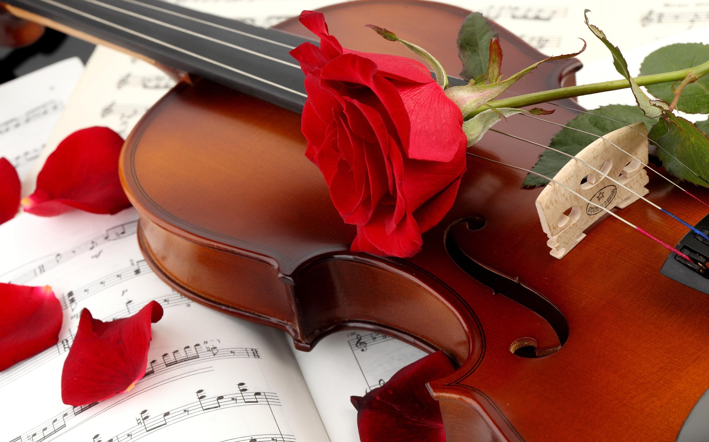 Violín y rosas rojas - 2880x1800